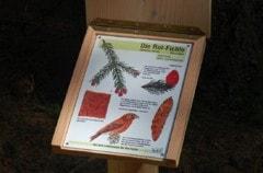 Baumtafel für Waldlehrpfad