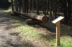 Baumtelefon für Waldlehrpfad